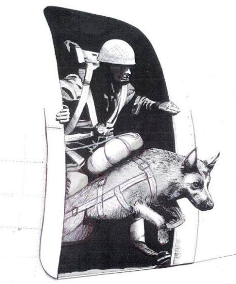 Parachuting dogs D Day